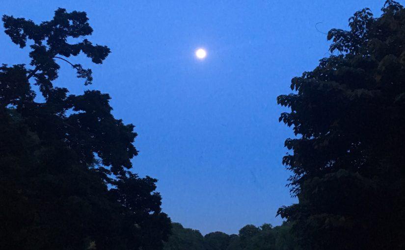 井の頭池の月あかり