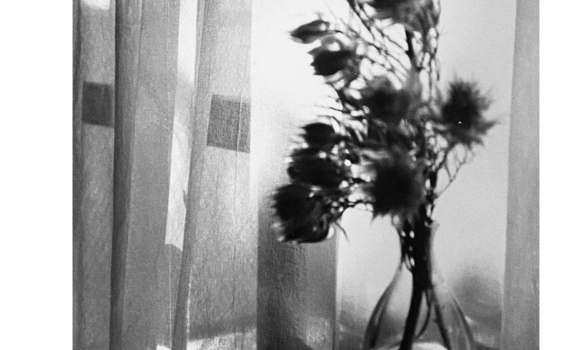 村山裕美 写真展「風の踊り、光の休符」5月5日tue〜10日sat
